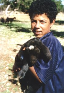 Young goat herder